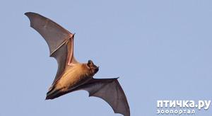 фото: Мои встречи с летучими мышами