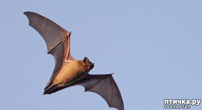 фото 1: Мои встречи с летучими мышами