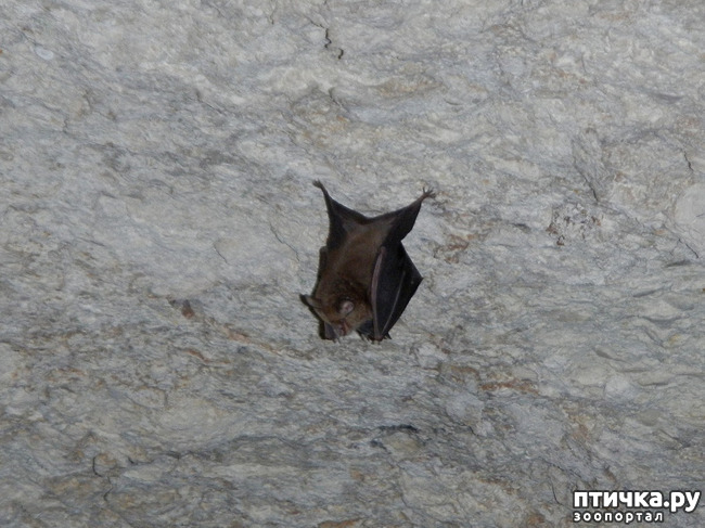 фото 5: Мои встречи с летучими мышами