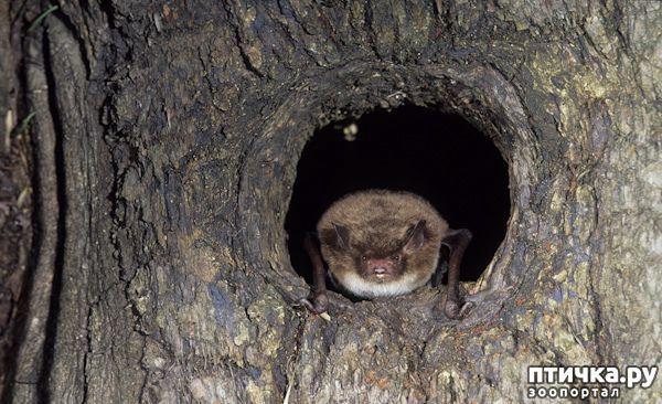 фото 7: Мои встречи с летучими мышами
