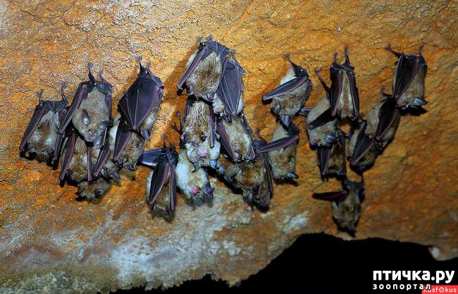 фото 8: Мои встречи с летучими мышами