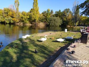 фото: Птицы парка