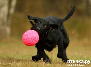 фото: Namigos Alabama Song - моя собака!