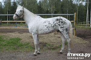 фото: Алтайские лошади