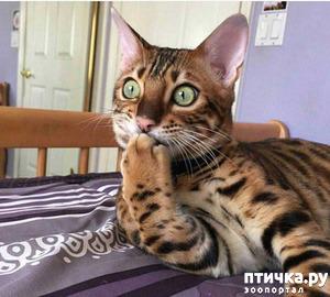 фото: Хозяева, которые сначала были категорически против приобретения собак: