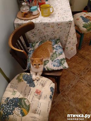 фото: Котик-всё-таки-невротик