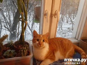 фото: Преображение невротика))