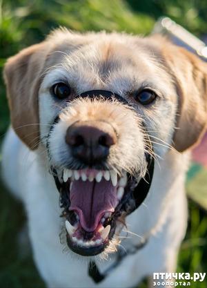 фото: Собачий прикус