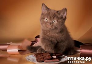 фото: За шоколадку дом и кроватка!