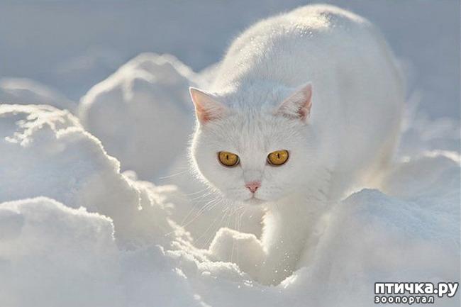 фото 3: Кошки: домашние и дикие