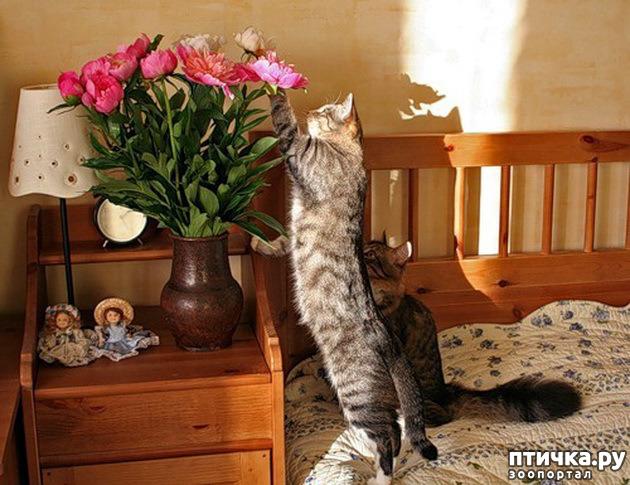 фото 6: Кошки: домашние и дикие
