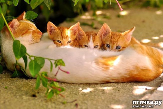 фото 4: Кошки: домашние и дикие