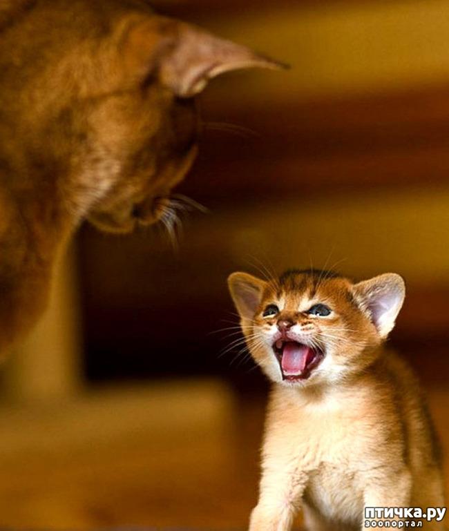 фото 1: Кошки: домашние и дикие