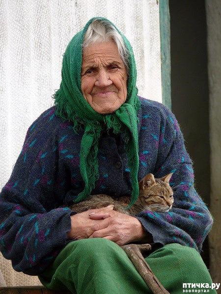 фото 10: Кошки: домашние и дикие