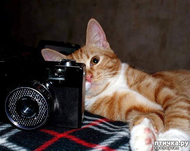фото 7: Кошки: домашние и дикие