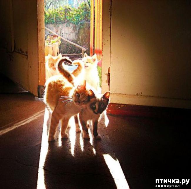 фото 14: Кошки: домашние и дикие