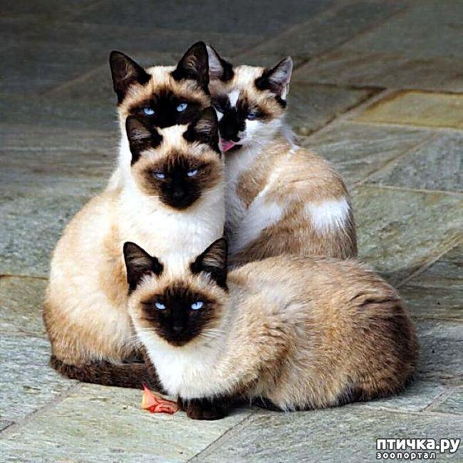 фото 13: Кошки: домашние и дикие