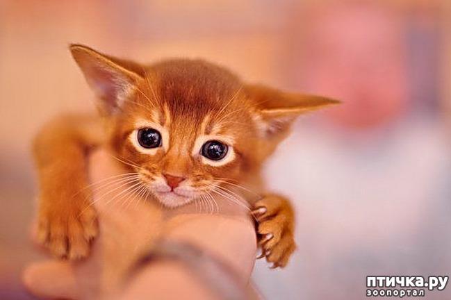 фото 15: Кошки: домашние и дикие