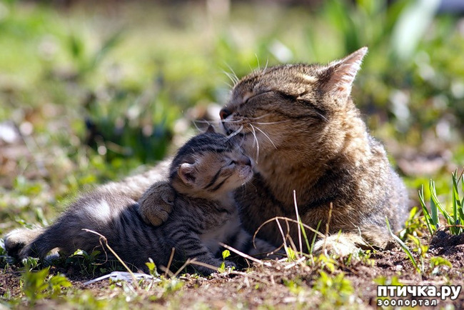 фото 17: Кошки: домашние и дикие