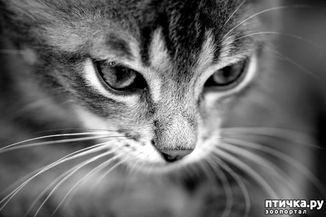 фото 16: Кошки: домашние и дикие