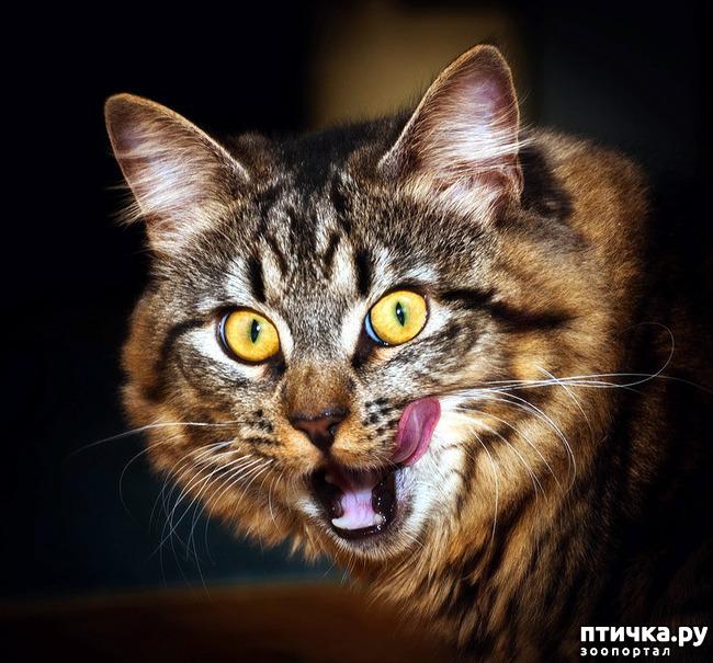 фото 18: Кошки: домашние и дикие
