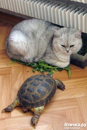 фото: Вы как хотите, а мне здесь больше нравится... (обнаглевшие коты)