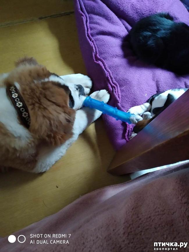 фото 1: Два длинных носа и один курносый. Как развиваются отношения между собаками.