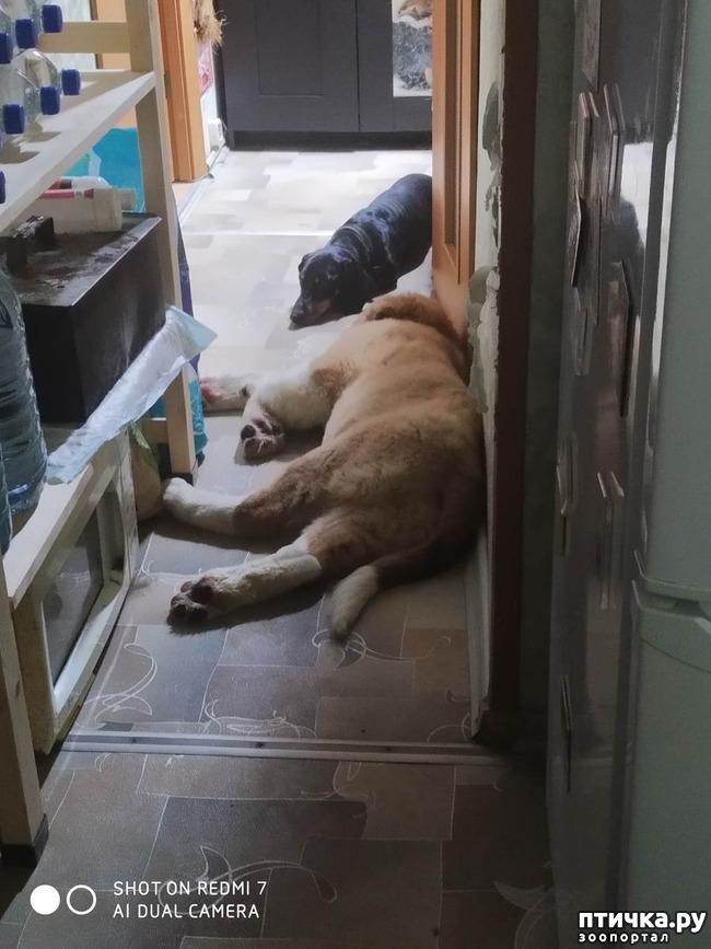 фото 3: Два длинных носа и один курносый. Как развиваются отношения между собаками.