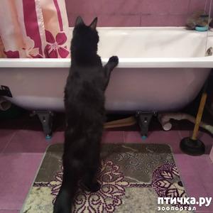 фото: Любопытный кот