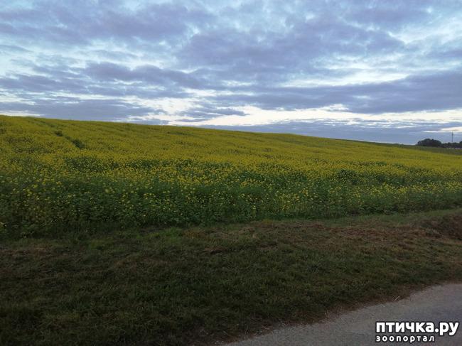 фото 1: А теперь гуляем по полям и холмам)))