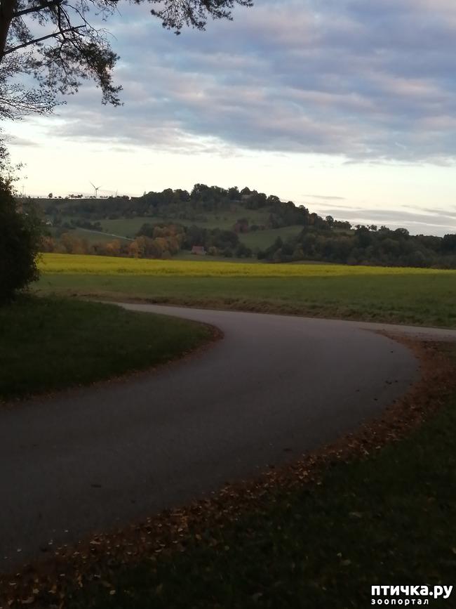 фото 5: А теперь гуляем по полям и холмам)))