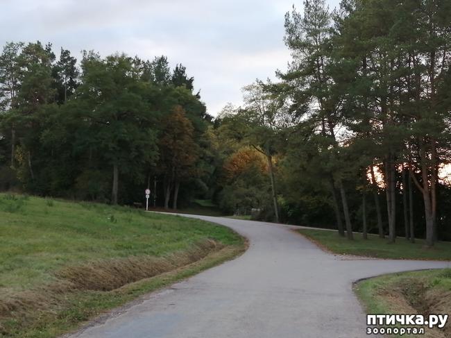 фото 6: А теперь гуляем по полям и холмам)))