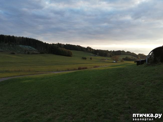фото 11: А теперь гуляем по полям и холмам)))