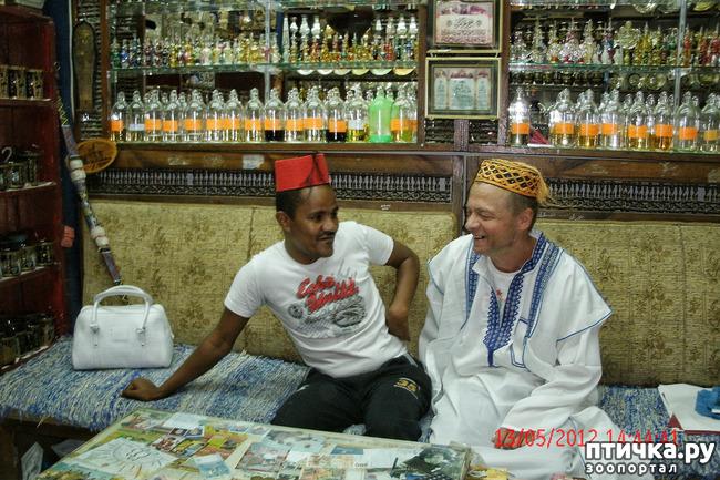 фото 52: Египет. Знакомство.