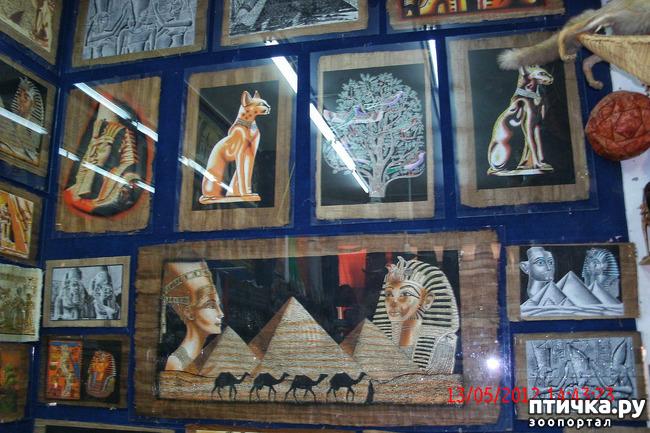 фото 56: Египет. Знакомство.