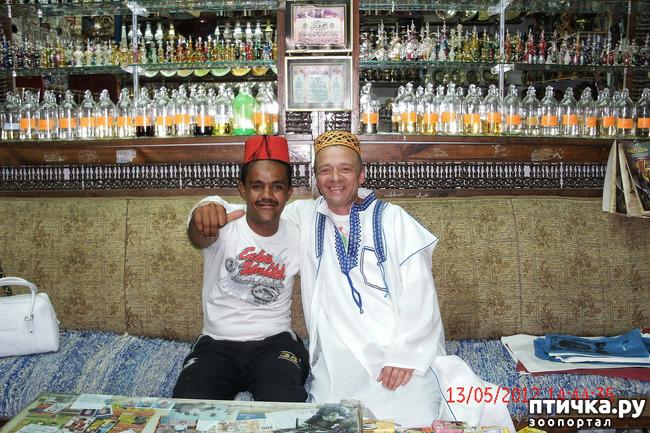 фото 51: Египет. Знакомство.