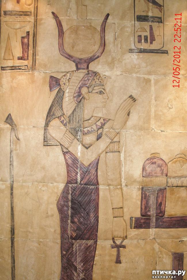 фото 39: Египет. Знакомство.