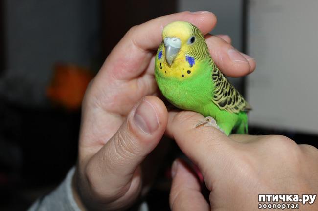 фото 1: Наша птичка, Пипочка