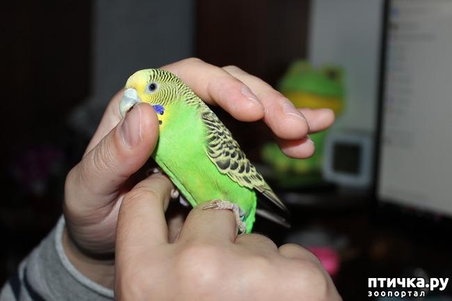 фото 5: Наша птичка, Пипочка