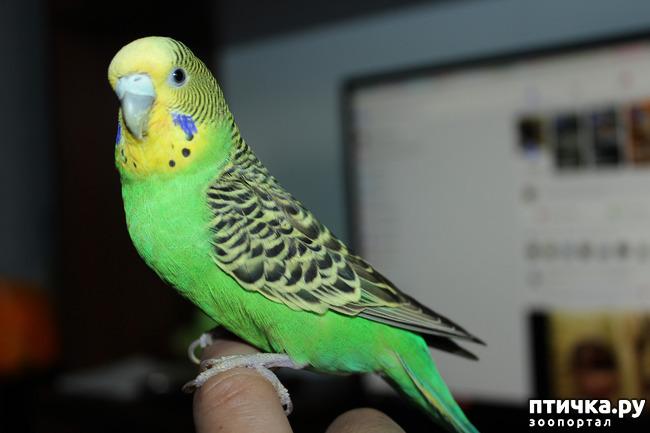 фото 3: Наша птичка, Пипочка