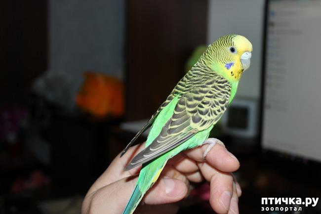 фото 6: Наша птичка, Пипочка