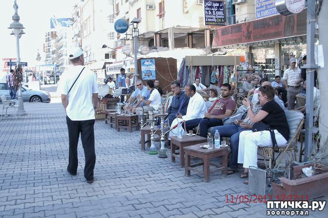 фото 9: Египет. Знакомство.