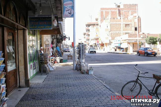 фото 10: Египет. Знакомство.