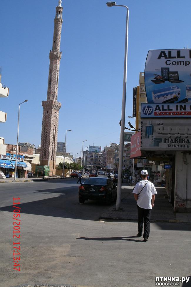фото 12: Египет. Знакомство.