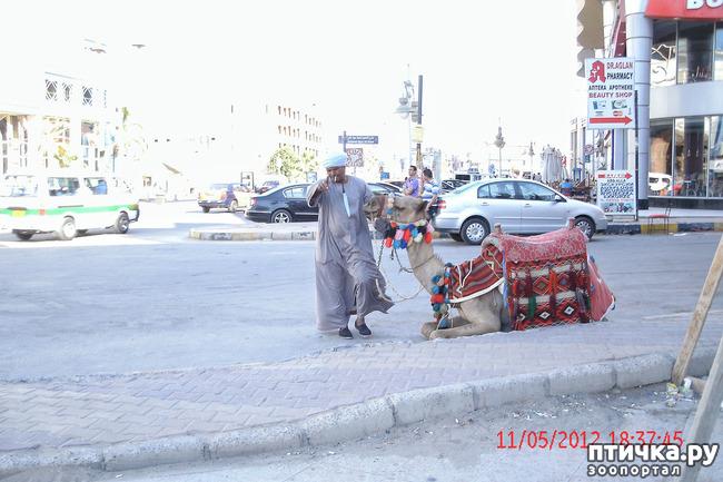 фото 7: Египет. Знакомство.