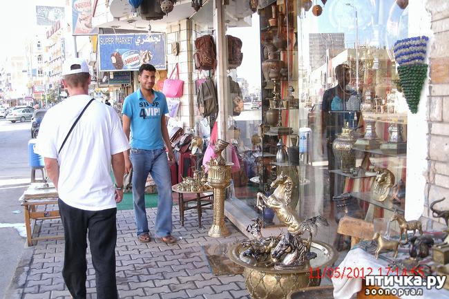фото 11: Египет. Знакомство.