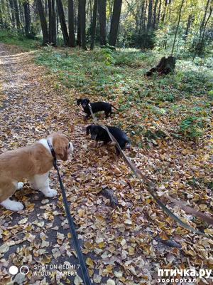 фото: Как бороться с ревностью, если собака не одна.