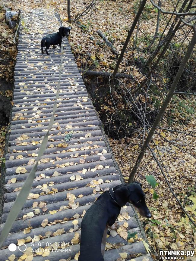 фото 2: Как бороться с ревностью, если собака не одна.