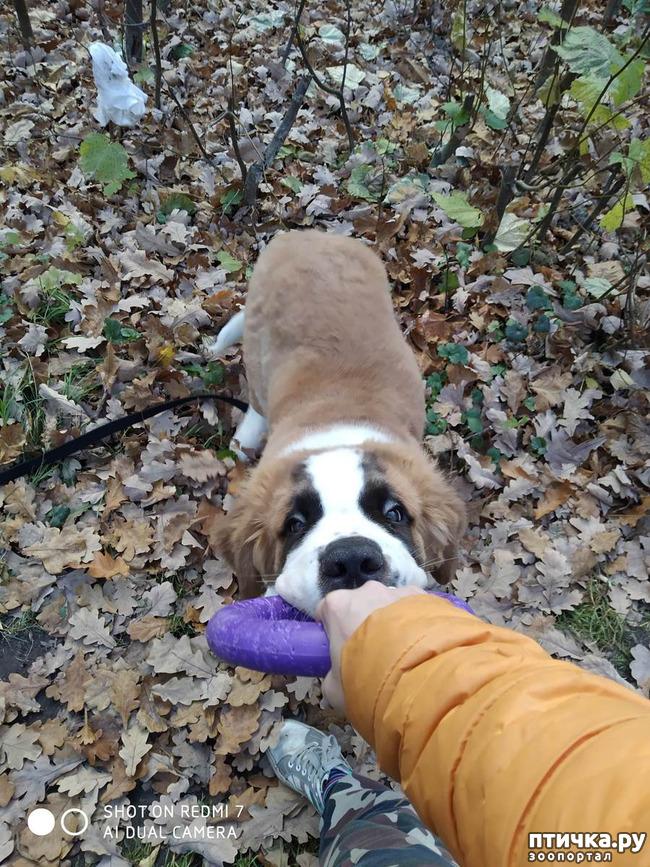 фото 4: Как бороться с ревностью, если собака не одна.