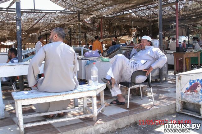 фото 4: Египет. Знакомство.